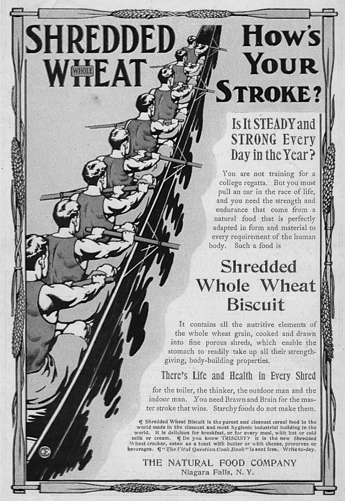Pic 3a. This American ad from 1905 urges the consumption of 'Shredded Whole Wheat Biscuit' as we all 'must pull an oar in the race of life' and 'need Brawn and Brain for the master stroke that wins'. What ever they ate, this crew would do better if they all had their outside hands on the end of their handles.