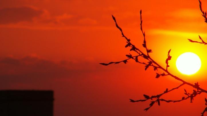 orangesunset