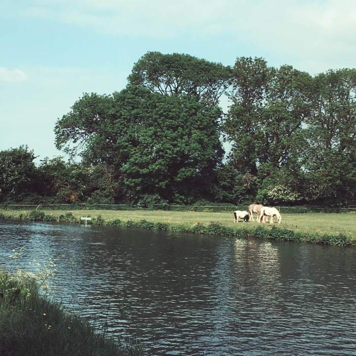 Picture One: This idyllic portrait of the English countryside is the field on First Post Corner. Come bumps the equines will all be temporarily relocated so spectator tents can be set up. Photo: CL.