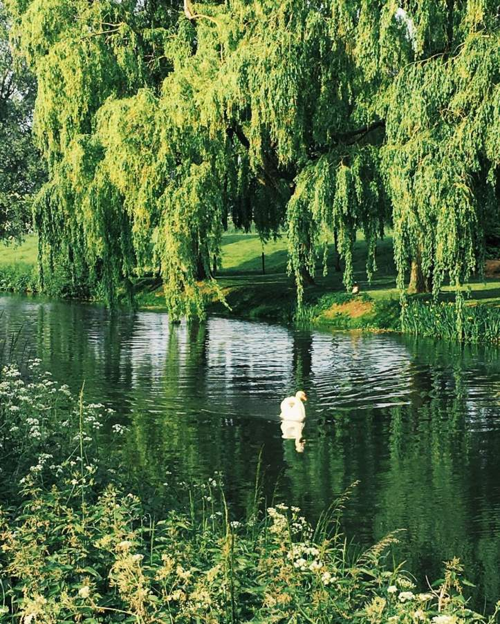 Picture Seven: A deceptively peaceful scene on the water below Baits Bite Lock. Photo: CL.