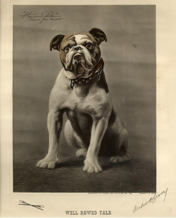 The original Yale Bulldog mascot, Handsome Dan I, c.1890.
