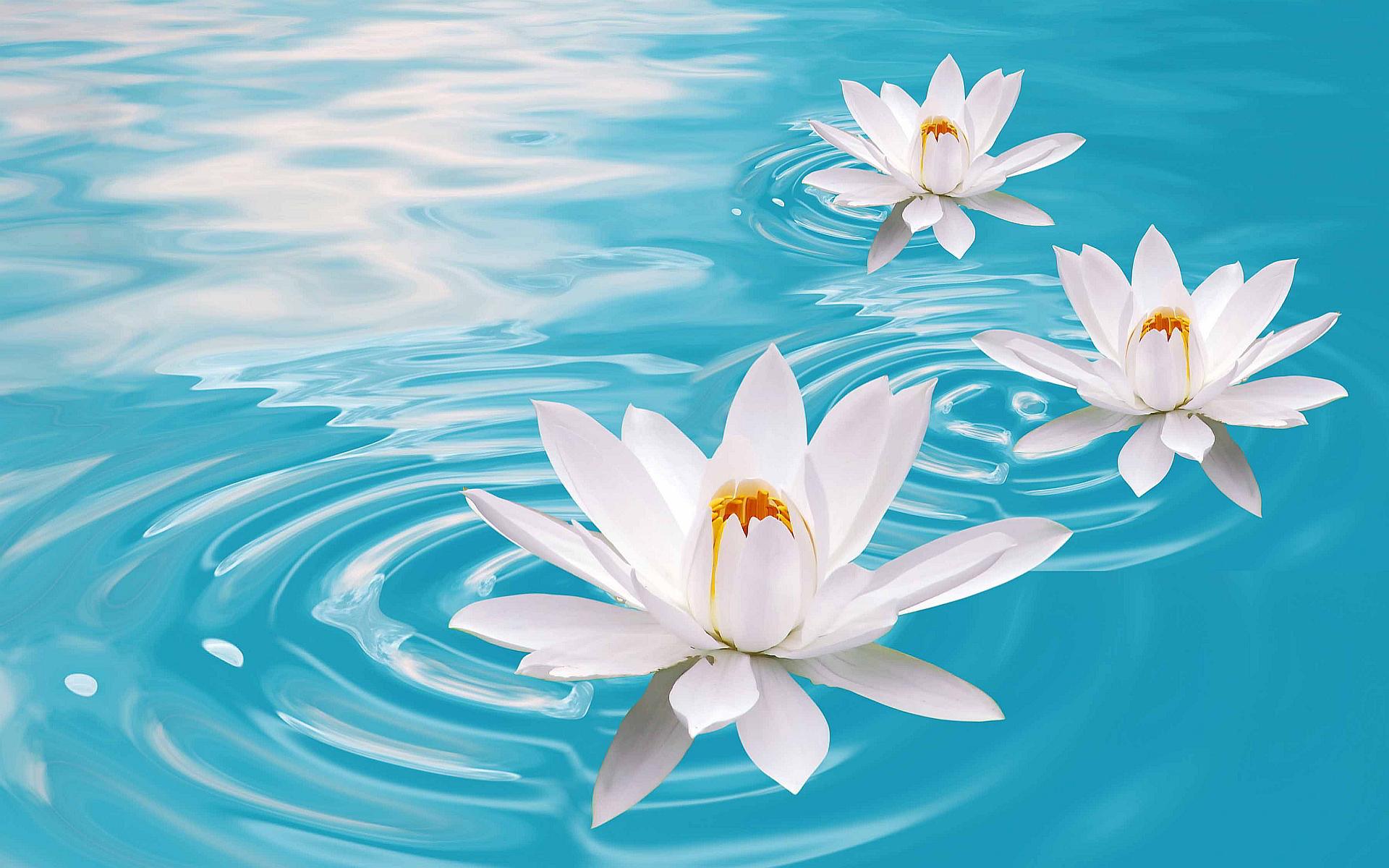 Buddha Boats Hear The Boat Sing