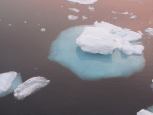 little-iceberg